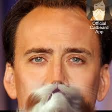 Cat Beard Meme - nicolas cage catbeard the official cat beard app