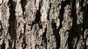free photo bark textures tree wood pattern free image on