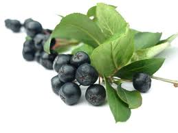 Little Berry This Future Superfood Fights Pancreatic Cancer