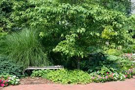 organic tree shrub care bergen county northern nj