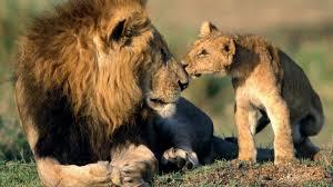 interior department twitter ban buchanan urges trump to keep ban on african lion trophies