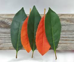free images tree branch leaf flower orange green red