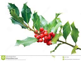 christmas tree spikes christmas trees 2017