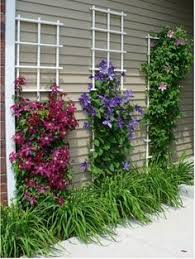 Landscape Design Backyard by The Plant Grouping Around My Mailbox It Includes A Clematis Vine