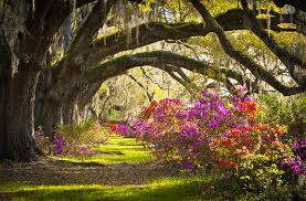 South Carolina natural attractions images 10 top rated tourist attractions in south carolina planetware jpg