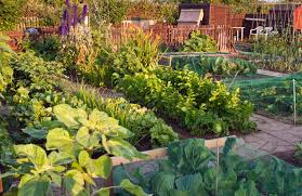 Vegetables Garden Ideas 24 Fantastic Backyard Vegetable Garden Ideas