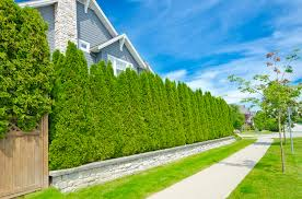 Create Privacy In Backyard How To Reduce Noise In Your Yard The Money Pit
