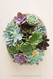 succulent bouquet succulent bouquet garden succulents and