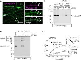 inverse synaptic tagging of inactive synapses via dynamic