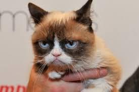 Gato Meme - due祓a del gato de los memes gana millonaria demanda en eeuu