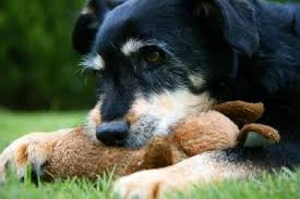 Dog Burial Backyard The Controversy Over Fast Growing Pet Funeral Business U2013 Forever
