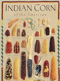 native plants of india indian corn hgtv