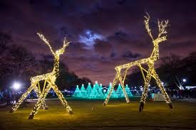 brookfield zoo winter lights holiday events guide from chicago tonight tis the season