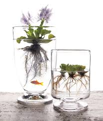 Plant Vase Best 25 Water Plants Ideas On Pinterest Indoor Gardening Water
