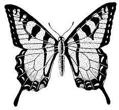 file butterfly psf png the work of god u0027s children