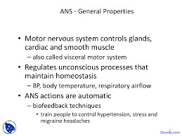 Ans Anatomy And Physiology Autonomic Nervous System Human Physiology And Anatomy Lecture