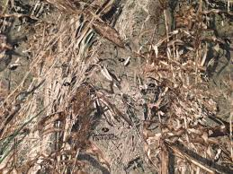 Mossy Oak Duck Blind Camo Clothing Mossy Oak Duck Blind Pc Twill Camouflage Fabric At Lura U0027s