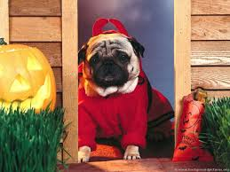 halloween background funny funny costume for dogs 13 background wallpaper funnypicture org
