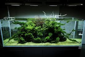 Nature Aquascape Home Design Gallery Aquascape Nature Aquarium By Awful Zhydoor