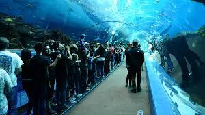 aquarium georgia aquarium halts effort to bring dolphins belugas to