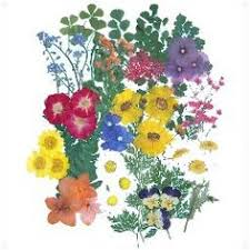 Flowers For Sale Handmade Pressed Flower Greeting Card Flowers Flower And