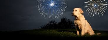 structuring a course for dogs with fireworks anxiety today u0027s