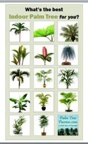 best indoor palm trees