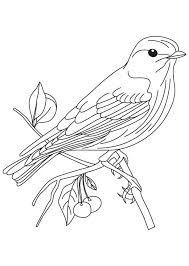 bird coloring pages to print bird coloring page others at this site eco garden pinterest