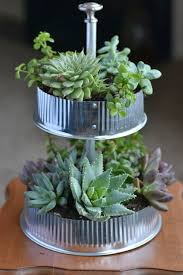 Table Top Herb Garden 281 Best Succulents Images On Pinterest Gardening Cactus And Plants
