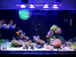 Floating Aquascape Reef2reef Saltwater And Reef Aquarium Forum - johnny ciotti u0027s red sea reefer 250 page 2 reef2reef saltwater