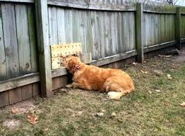 backyard ideas for dogs backyard ideas for dogs backyard ideas for dogs picture on amusing