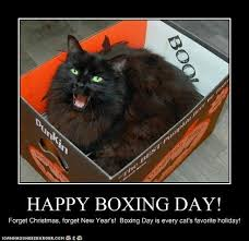Boxing Day Meme - i can has cheezburger boxing day funny animals online