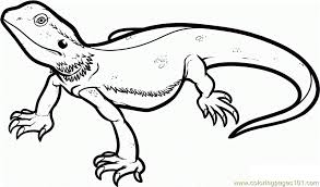 desert lizard coloring page lizard coloring page free lizard coloring pages coloringpages101 com