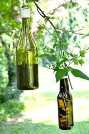 Wine Bottle Planters by Photo 15 Jpg 2 448 3 264 Pixels Hanging Planters Pinterest