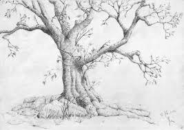 trees lessons tes teach
