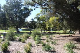 kings park native plant sale perth u2013 the destinations guru