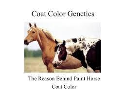 coat colorgenetics part1