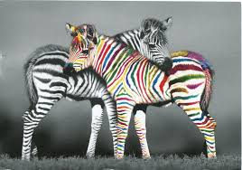 zebra of a different color remembering letters and postcards