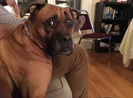 Confused Dog Meme - my friend s dog is always concerned about everything rebrn com