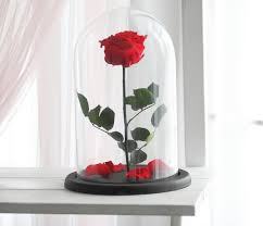 beauty and the beast rose large enchanted rose rose in