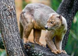 unique animals madagascar nature babamail