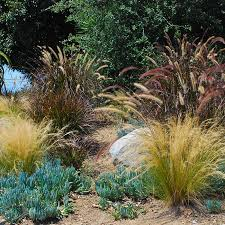 southern california gardening ornamental grasses