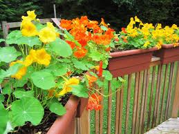 deck railing planter deck rail planters choice and appearance