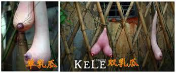 aliexpress com buy selected high quality vietnam gourd seeds