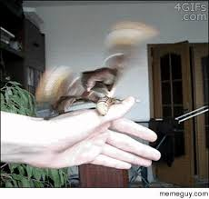 Moth Meme - a goldfinch big moth meme guy