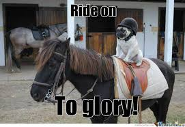 Horse Riding Meme - dog riding horse by turtles meme center