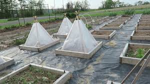 parsley starts under a solar pyramid u2014 this agrarian life episode