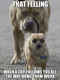 Dog Funny Meme - 45 funny dog memes dogtime feedpuzzle