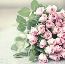 white roses for sale white garden roses bulk white garden roses for sale 170 best jos