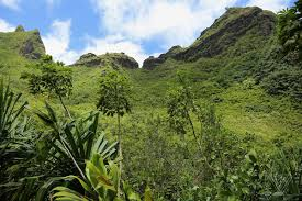 hawaiian plants drones hunt plants in hawaii by going where can t